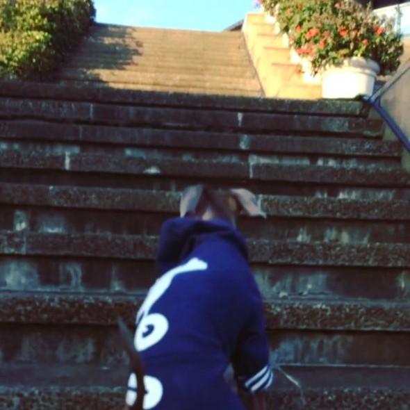 階段ガニガニ 動画